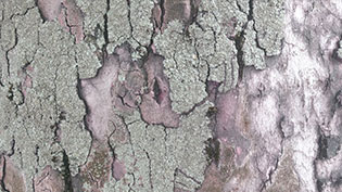 an image of a close up of a tree