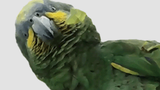 an image of a parrot