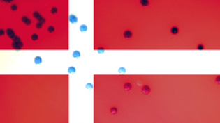 an image of the Dannish flag & bacteria