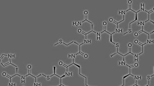 an image of a peptide